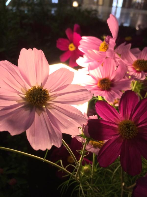Blumenmuseum1.jpg