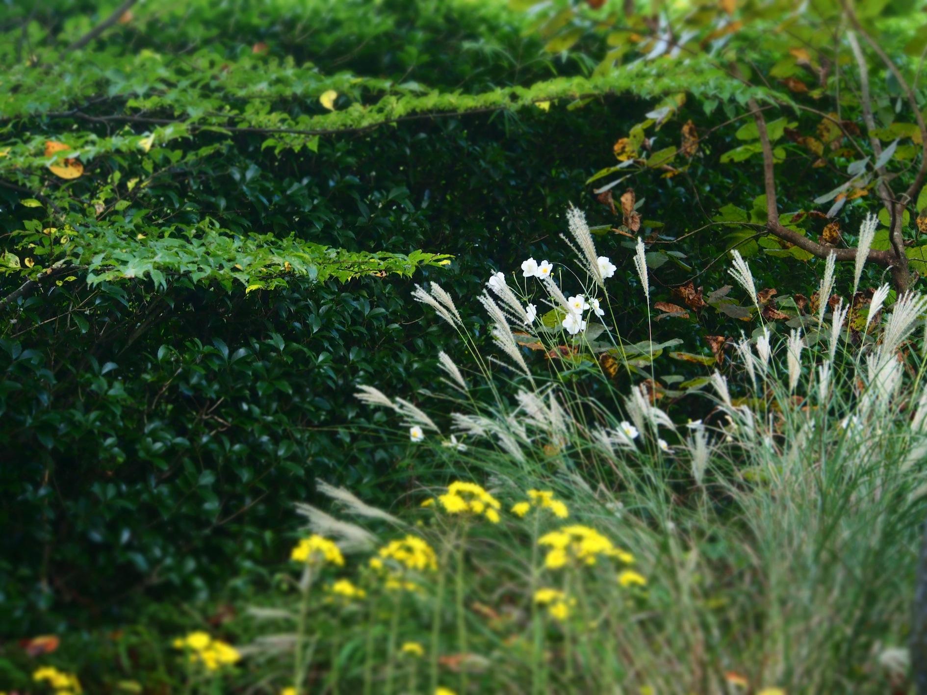 Herbstblumen1.JPG