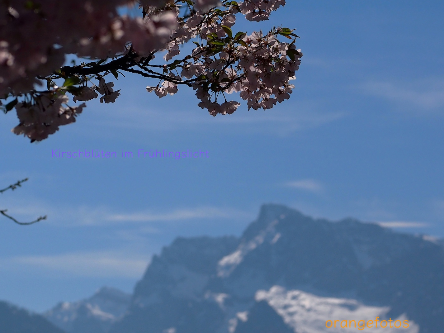 Kirschblüten mit Watzmann.jpg