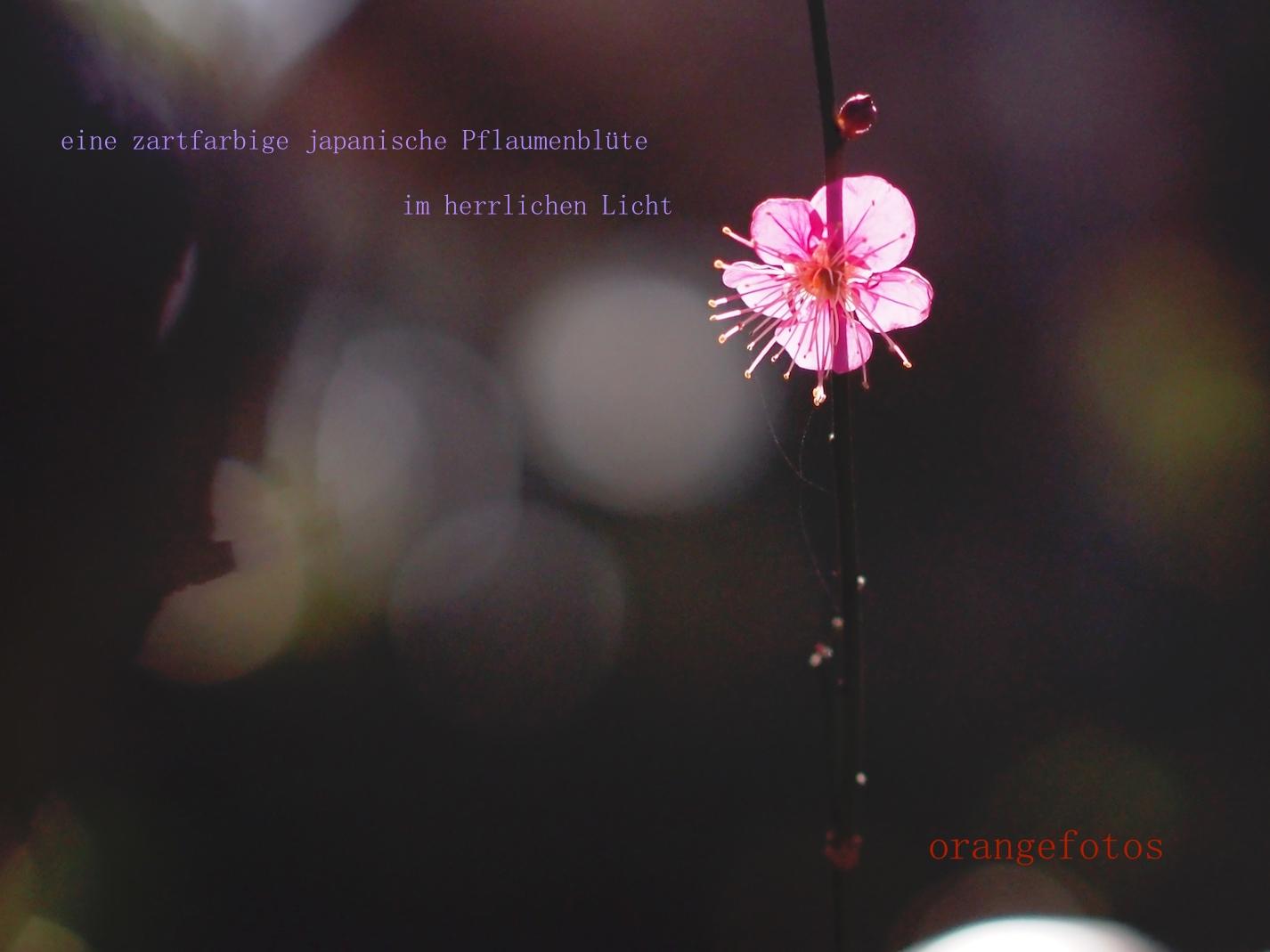 Pflaumenblüten 04.02.17.jpg