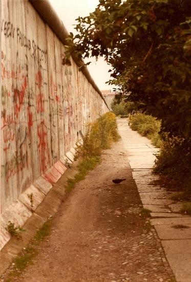 Taube an der Mauer.jpg
