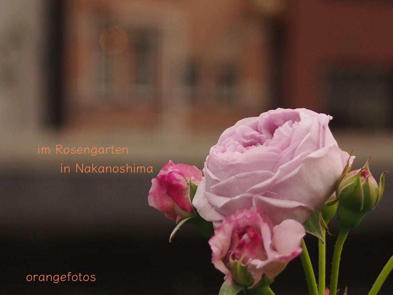 rosa Rosen.jpg